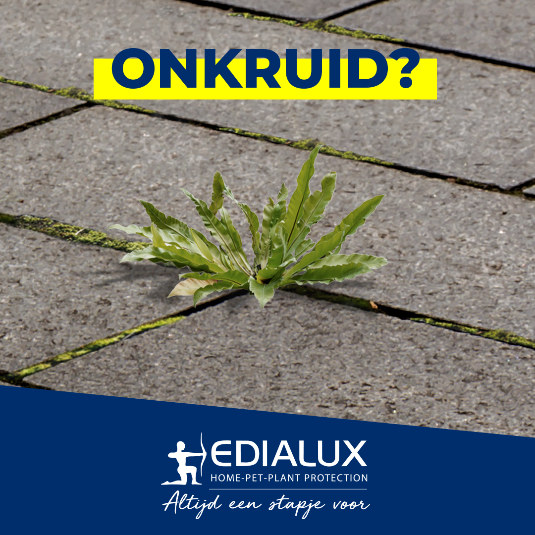 EDIALUX CAROUSEL ONKRUID NL 01