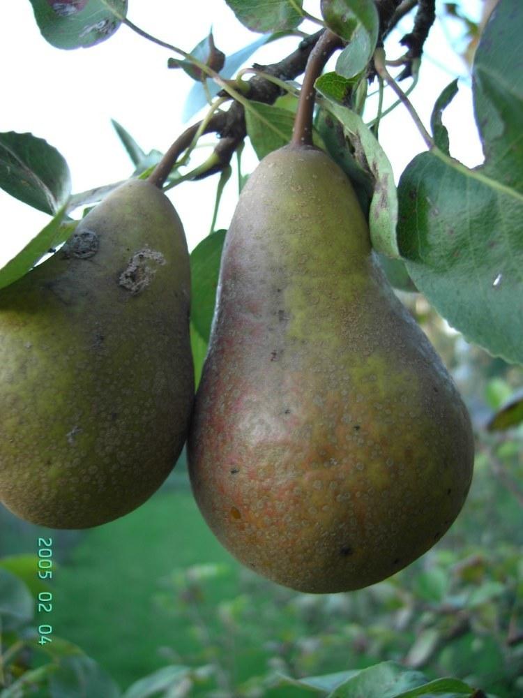 Fruitmot 1 Aangepast