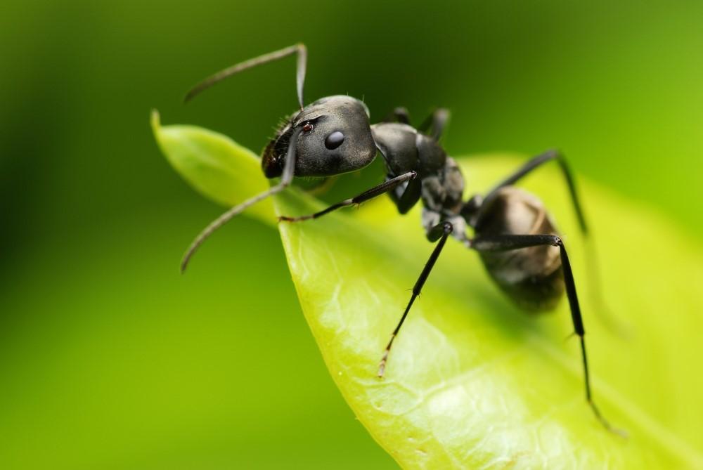 Mieren Aangepast